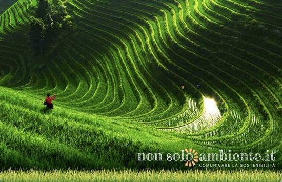 Cina: la prima roadmap per un' agricoltura più sostenibile