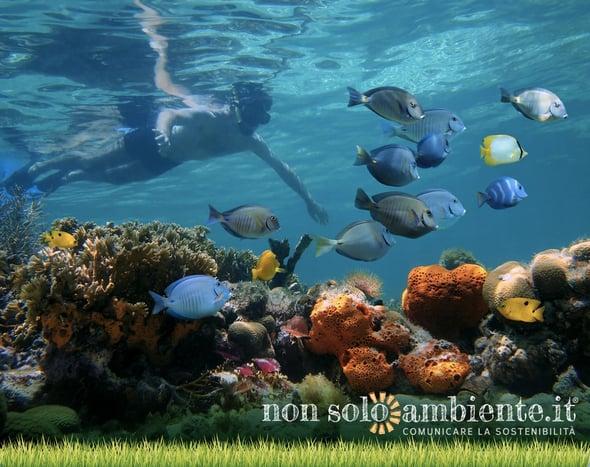 Specie ittiche tropicali mettono a rischio il Mediterraneo