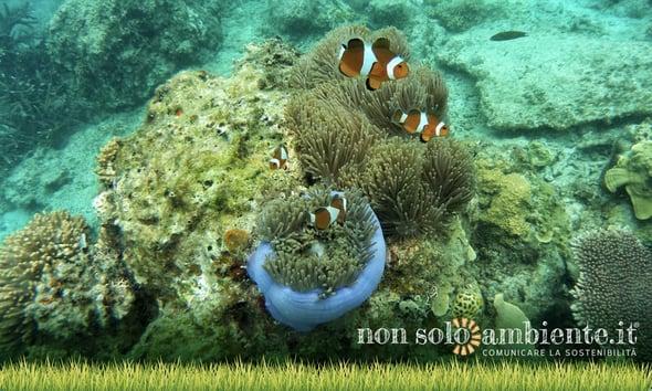 Biodiversità oceanica minacciata dalle miniere sottomarine