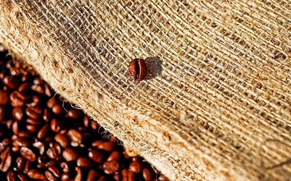 Caffè a rischio, il riscaldamento globale minaccia le piantagioni