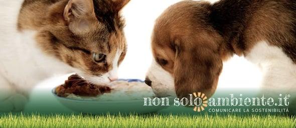 Cani e gatti inquinano come le automobili