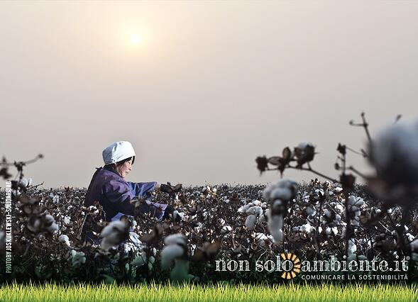 Sustainable Cotton Ranking: le aziende che usano cotone sostenibile