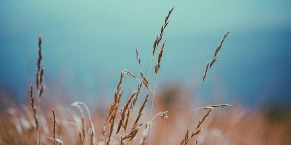 Innovazione sostenibile: nasce il biodiserbante al profumo di olio e di vino