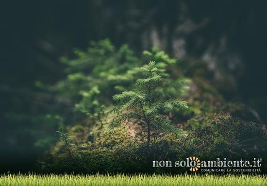 Qual è lo stato ambientale in Italia?