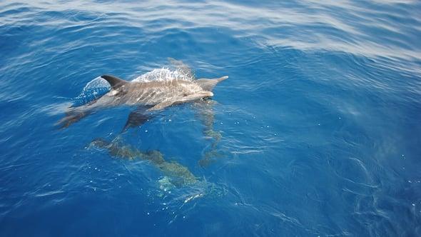 Messico, delfini addestrati per salvare cetacei in via d'estinzione