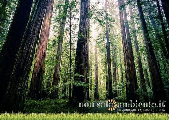 """""""Forest For Future"""" tutela foreste e biodiversità"""