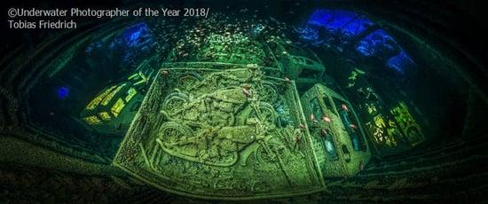 Underwater Photographer of the year: i vincitori 2018