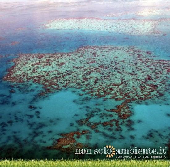 Barriera corallina australiana, trovato il modo per riprodurla