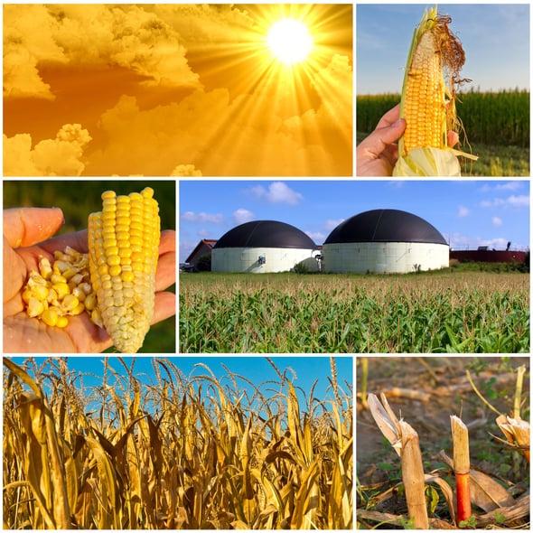 Biogas e biometano, un potenziale da sfruttare al meglio