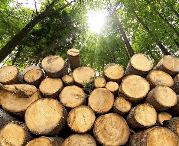 Biomasse: utili per l'ambiente, nocive per la salute?