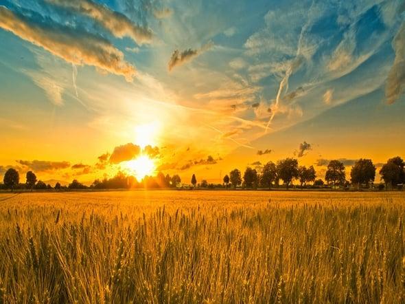 In agricoltura il 40% di risparmio energetico grazie alle tecnologie 'green'