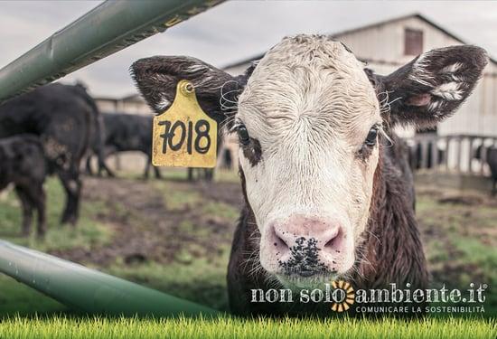 Industria alimentare e CO2: carne e latticini superano il petrolio