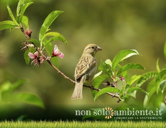 Inquinamento acustico: ecco gli effetti che ha sugli uccelli