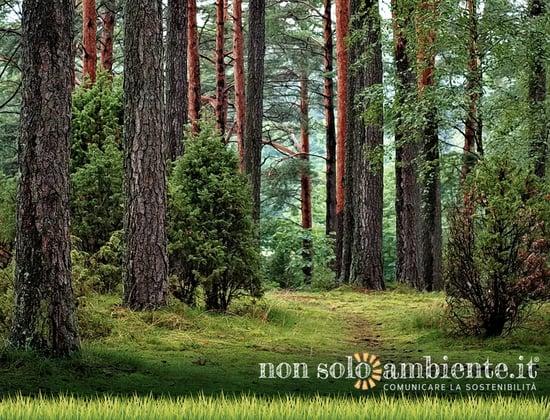 La Romania vittima del disboscamento selvaggio: a rischio il polmone verde d'Europa