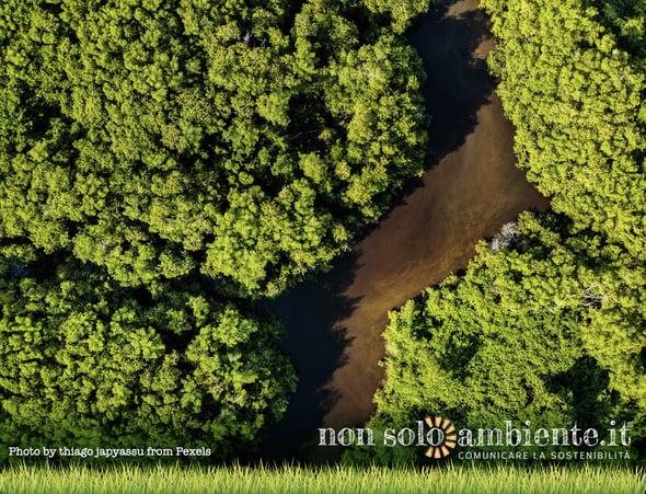 Piovono milioni sull'Amazzonia. Ma il pericolo incendi resta