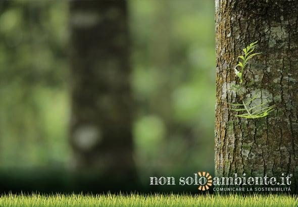Ripristinare le aree boschive per salvare l'ambiente: la ricerca
