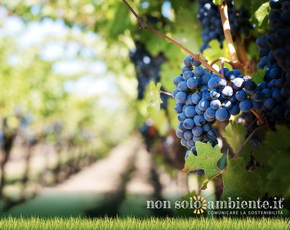 Slow Wine festeggia i suoi primi 10 anni nel segno del vino di qualità