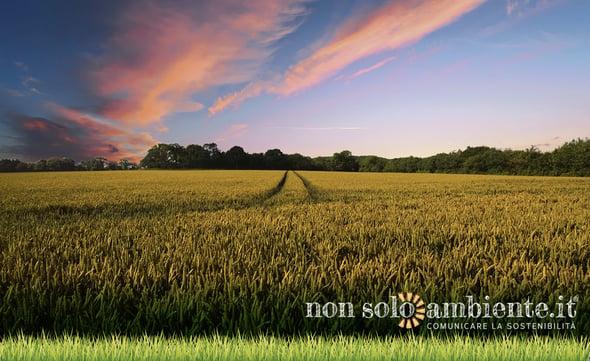 Sostenibilità in agricoltura: il suolo chiede aiuto