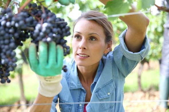 """Agricoltura 4.0: ai giovani il compito di """"svecchiare"""" il settore agricolo italiano"""
