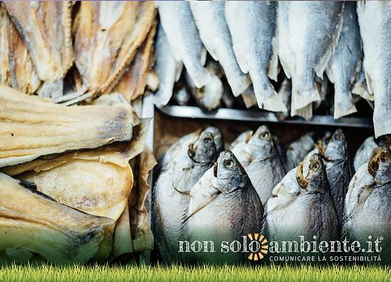 Che cosa sappiamo del regolamento UE sulla pesca