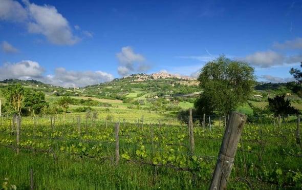 Qualità e sostenibilità nel vino: su quali basi costruire un equilibrio?