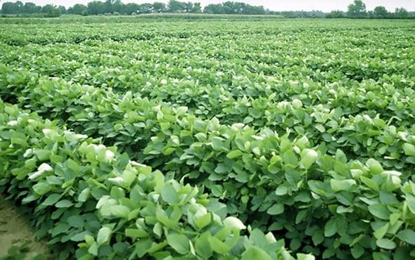 Agricare: l'agricoltura riduce le emissioni di carbonio