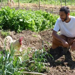 WWOOF, imparare l'agricoltura biologica in vacanza