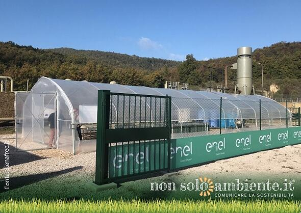 La prima coltivazione di alga spirulina grazie alla geotermia