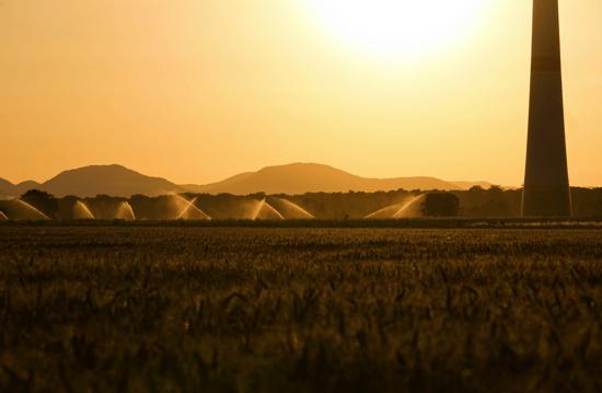 L'adattamento ai cambiamenti climatici come opportunità di sviluppo per il settore agricolo e forestale