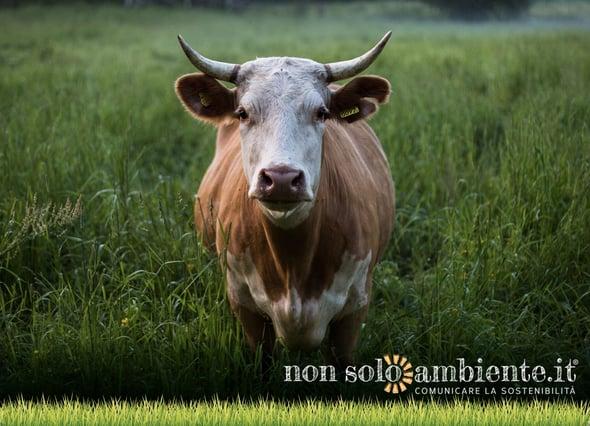 Qual è l'impatto del consumo di carne sull'ambiente?
