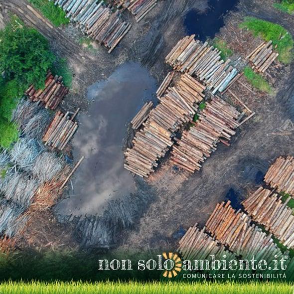 Foreste in vendita: 600 scienziati scrivono all'Europa per chiedere trasparenza nelle importazioni