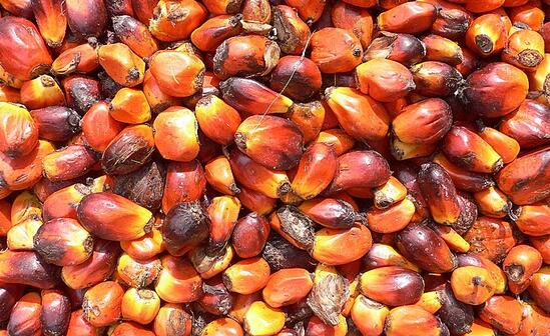Olio di palma: continua il percorso verso la sostenibilità