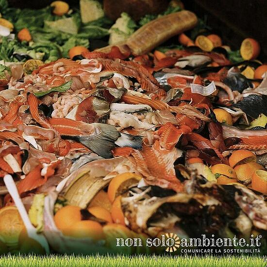 Fighting food waste: the European guidelines