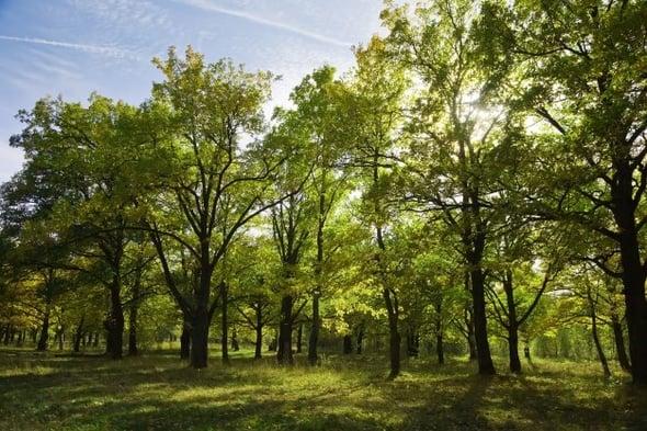 Polonia, via al disboscamento dell'ultima foresta vergine d'Europa