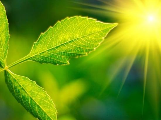 Aumenta la fotosintesi: è un bene o un male?