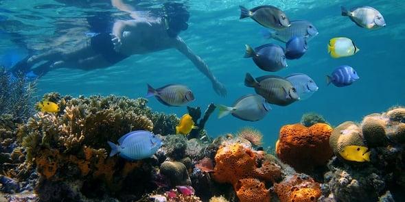 Nel Pacifico, atolli da sogno e isole incontaminate. Ma lo sono davvero?
