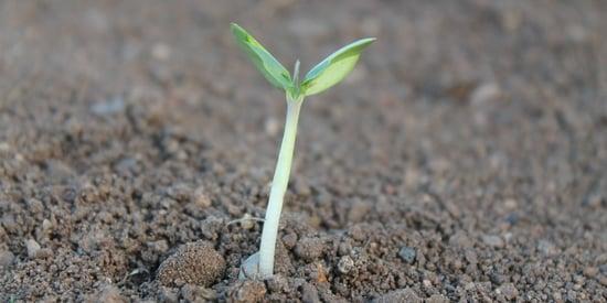 Life Resafe, dai rifiuti organici fertilizzante ecologico