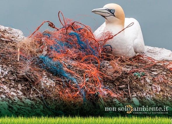 Oceani di plastica: a repentaglio gli ecosistemi marini