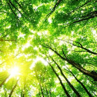 Biodiversità nei Comuni italiani: parte il progetto