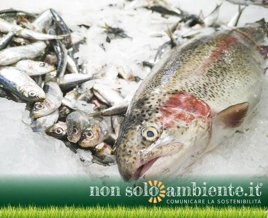 Pesca insostenibile nel mirino dell'Onu e della FAO