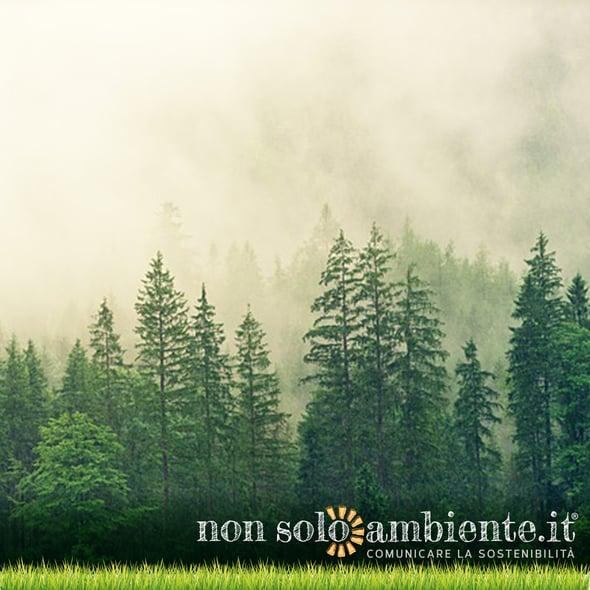 Piantare alberi per salvare il pianeta