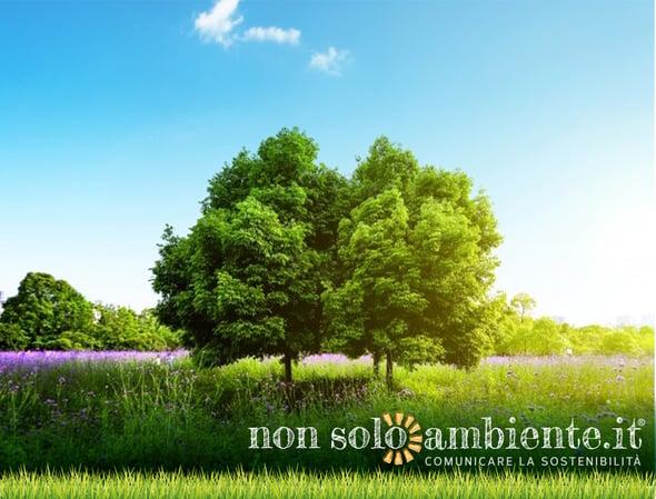 254 nuovi alberi entro il 31 dicembre: la promessa di Credem