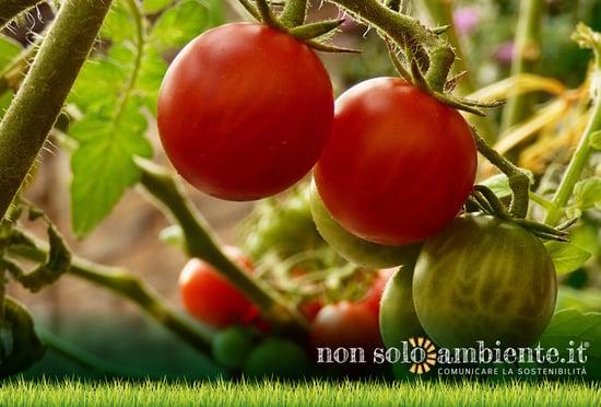Passi avanti per la tutela della filiera agroalimentare sostenibile