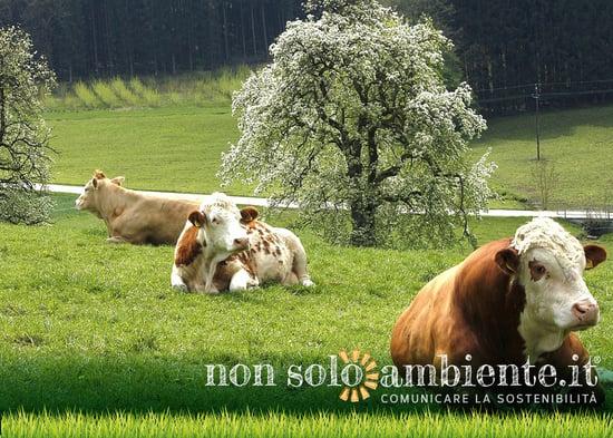 Nuovi progetti per la circolarità dell'agroalimentare