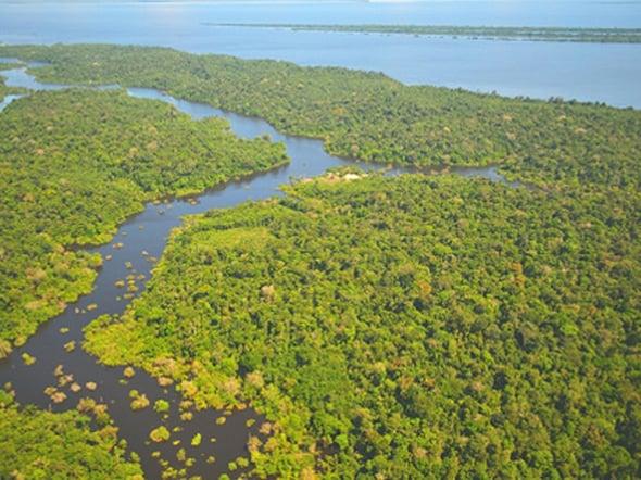 Girolomoni aderisce al progetto Foreste in Piedi