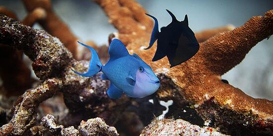 Un trattato per la protezione degli oceani, bene comune e patrimonio dell'umanità