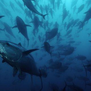 Una commissione mondiale per salvare gli Oceani