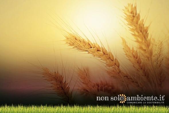 Vede la luce il Progetto SIMBA: più cibo, meno impatto