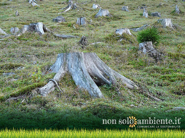 Foreste decimate in Uganda e progetti di rimboschimento sostenibile