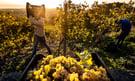 Sicily_Wine2